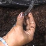 How to make compost explained by Mrs. Severa